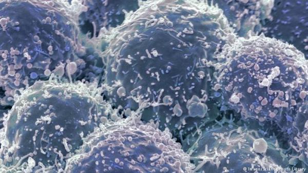 saratan_743008956 دراسة: الشاي يساهم في إبطاء الشيخوخة ووقف تطور الأمراض السرطانية منتدى أنوال